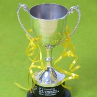 Yellowdot Cup